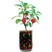 Magic Plant Carolina Reaper® Plant in a Can!
